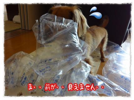 2012_5_2_7_convert_20120502231114.jpg