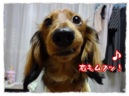 2012_5_30_8_convert_20120530233320.jpg