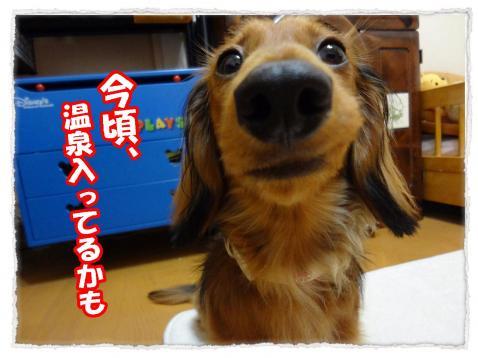 2012_5_31_2_convert_20120531002212.jpg