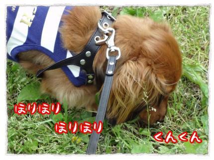 2012_5_6_2_convert_20120506233447.jpg