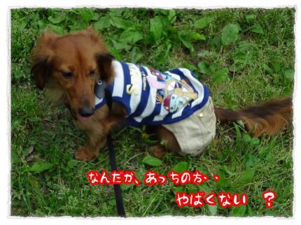 2012_5_6_3_convert_20120506233505.jpg