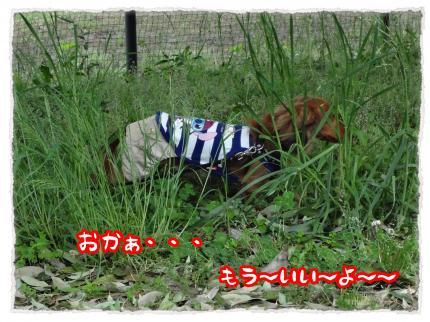 2012_5_6_6_convert_20120506233559.jpg