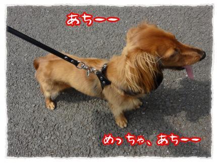2012_5_8_1_convert_20120508224614.jpg