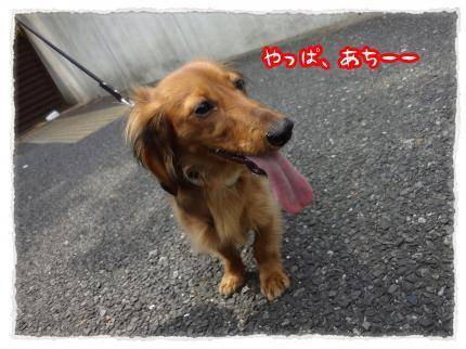 2012_5_8_2_convert_20120508224656.jpg