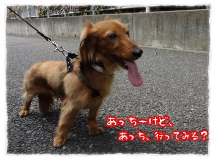 2012_5_8_3_convert_20120508224717.jpg