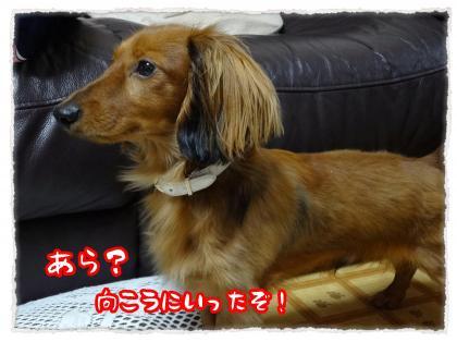 2012_5_9_3_convert_20120509225529.jpg
