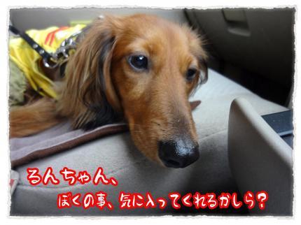 2012_6_11_1_convert_20120611231833.jpg