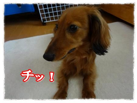 2012_6_12_4_convert_20120612234320.jpg
