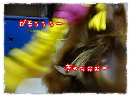 2012_6_13_9_convert_20120613233105.jpg