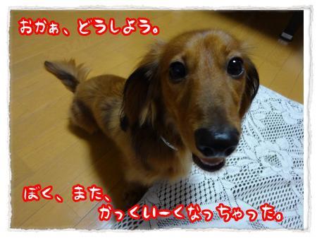 2012_6_16_1_convert_20120616232452.jpg