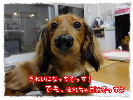 2012_6_16_6_convert_20120616232713.jpg