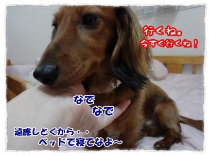 2012_6_19_4_convert_20120619230922.jpg
