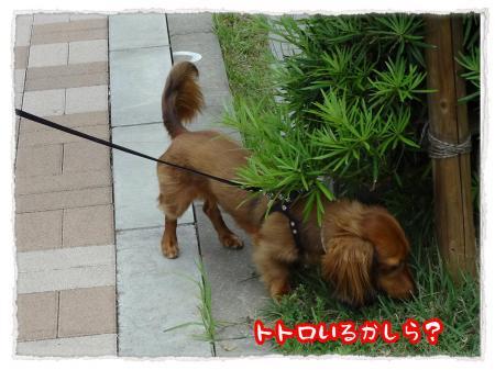 2012_6_20_3_convert_20120620234210.jpg