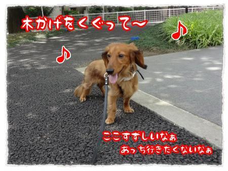 2012_6_20_5_convert_20120620234250.jpg