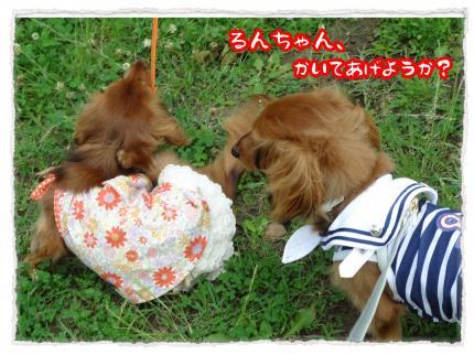 2012_6_25_2_convert_20120625230203.jpg