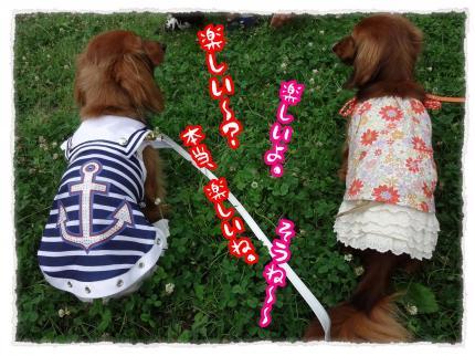 2012_6_25_4_convert_20120625230248.jpg