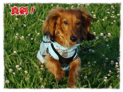 2012_6_27_4_convert_20120627225921.jpg