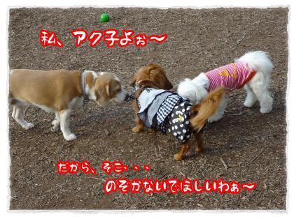 2012_6_28_3_convert_20120627235548.jpg