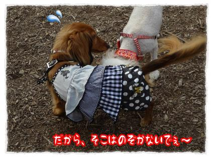 2012_6_28_4_convert_20120627235609.jpg