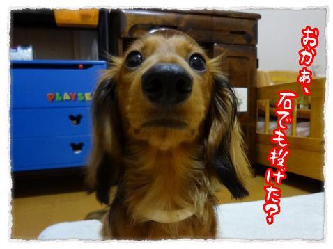 2012_6_29_2_convert_20120629231910.jpg