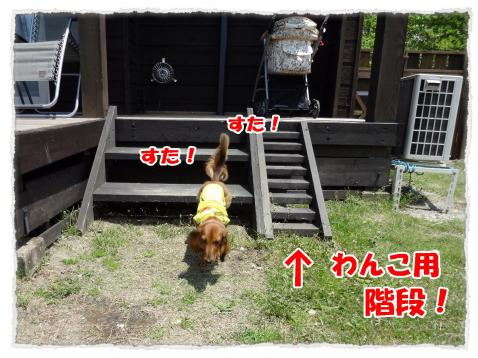 2012_6_4_1_convert_20120604235606.jpg