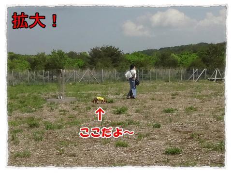 2012_6_4_4_convert_20120604235722.jpg