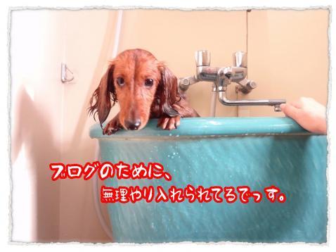 2012_6_7_2_convert_20120607232012.jpg