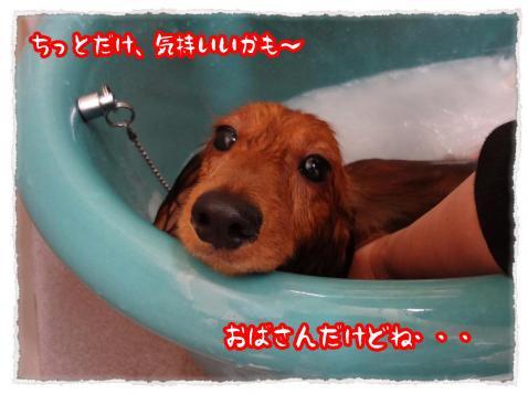 2012_6_7_3_convert_20120607232053.jpg
