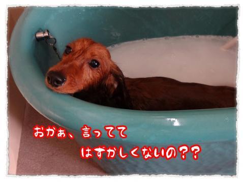2012_6_7_5_convert_20120607232912.jpg