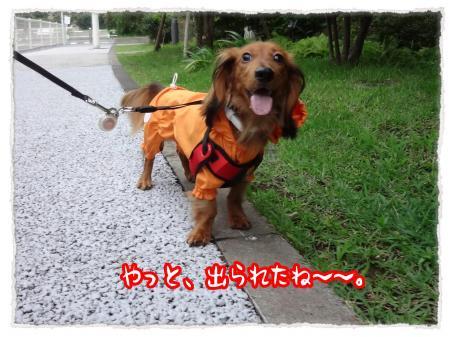 2012_7_12_1_convert_20120712230415.jpg