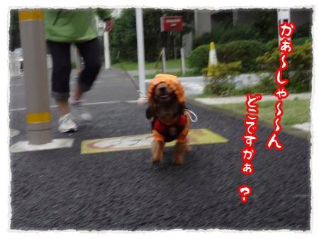 2012_7_12_3_convert_20120712230453.jpg