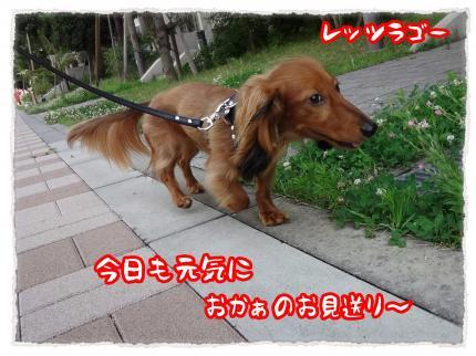 2012_7_13_1_convert_20120713233421.jpg