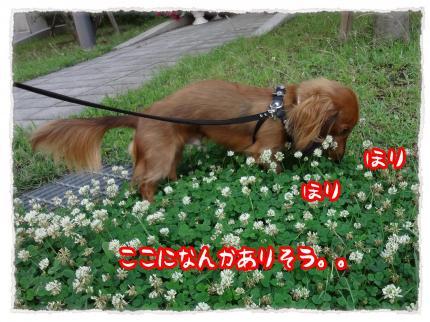 2012_7_13_2_convert_20120713233511.jpg