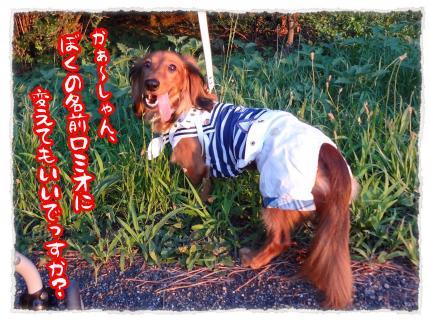 2012_7_17_7_convert_20120717232037.jpg