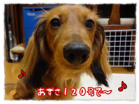 2012_7_19_2_convert_20120719231143.jpg