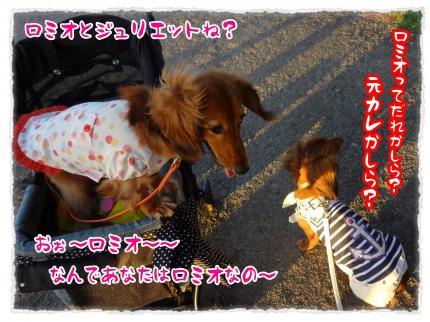 2012_7_19_6_convert_20120717232158.jpg