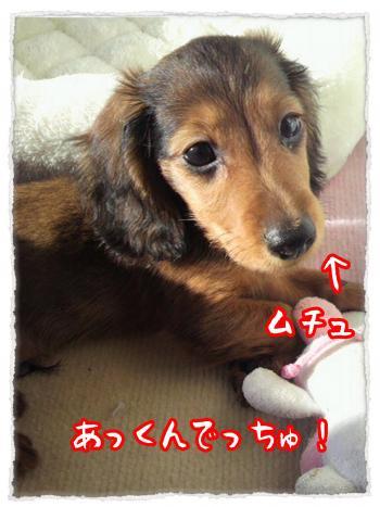 2012_7_19_6_convert_20120719231412.jpg