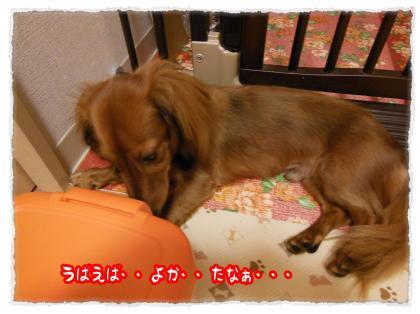 2012_7_20_10_convert_20120720233249.jpg