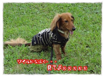 2012_7_22_11_convert_20120722224431.jpg