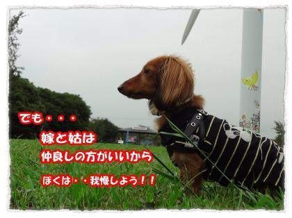 2012_7_22_12_convert_20120722224454.jpg