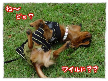 2012_7_22_7_convert_20120722224236.jpg