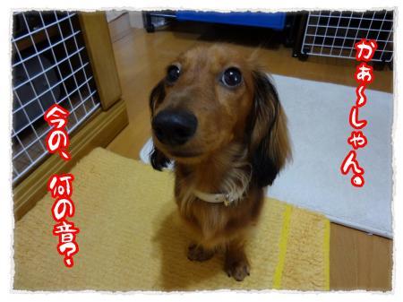 2012_7_23_1_convert_20120723234029.jpg