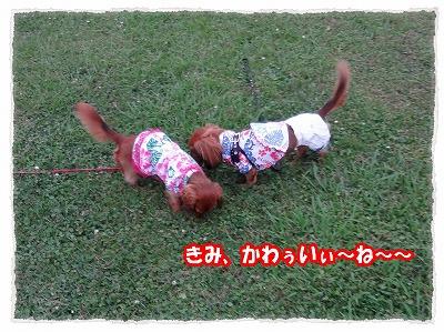 2012_7_24_4.jpg