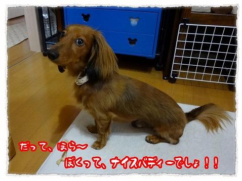 2012_7_26_4.jpg