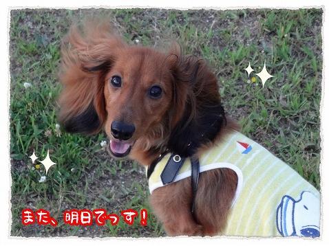2012_7_26_5.jpg