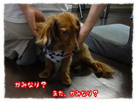 2012_7_28_7.jpg