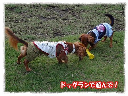 2012_7_29_3.jpg