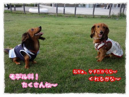 2012_7_29_5.jpg