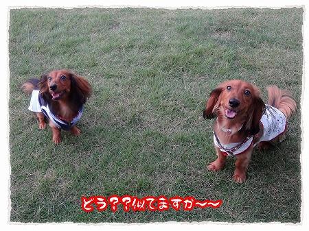 2012_7_29_6.jpg