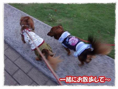 2012_7_29_7.jpg